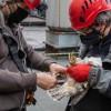 Trojaczki z rodziny sokołów wędrownych z Elektrowni Bełchatów zostały…