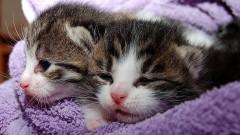 Bełchatowianin odpowie za rozdeptanie małych kotków