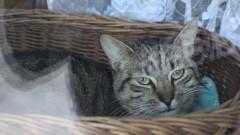 Interwencja fundacji Kocia Klitka. Zwierzęta żyły w tragicznych warunkach