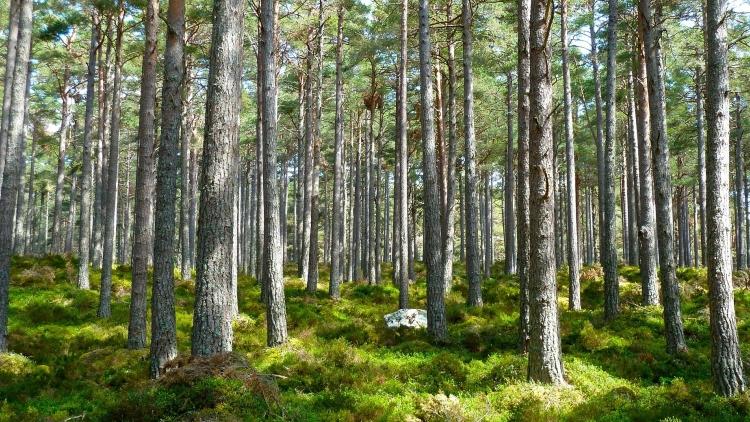 Wyjście do lasu? Dla bezpieczeństwa własnego i innych warto stosować się do tych zasad